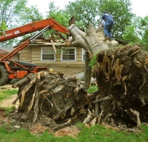 tree planting services