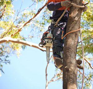 arborist pay grade