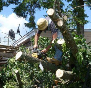 davey tree service locations
