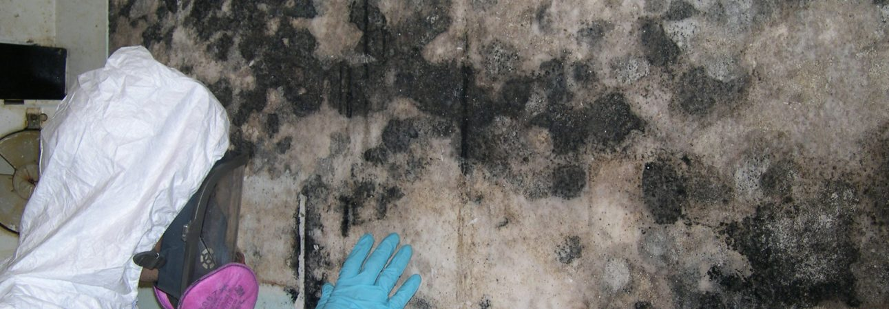 mold remedies here