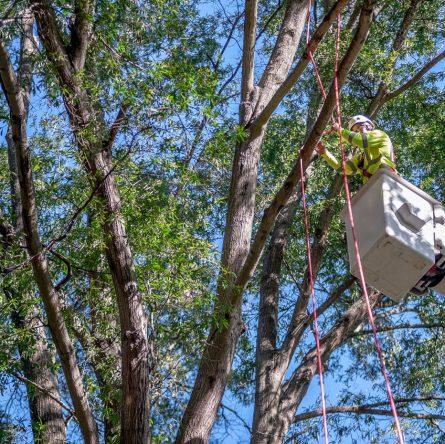 tree-service-provider